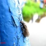 Отряд Вислокрылые (Megaloptera)