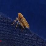 Отряд Равнокрылые хоботные (Homoptera)