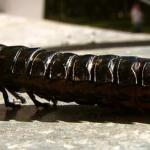 Отряд Жесткокрылые (Coleoptera)